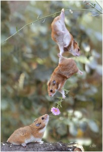 squirrellove